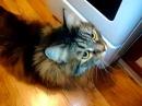 Смешные Прикольные Кошки 08