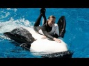 Seaworld's Shamu Believe Show (when trainers were allowed in the water!)