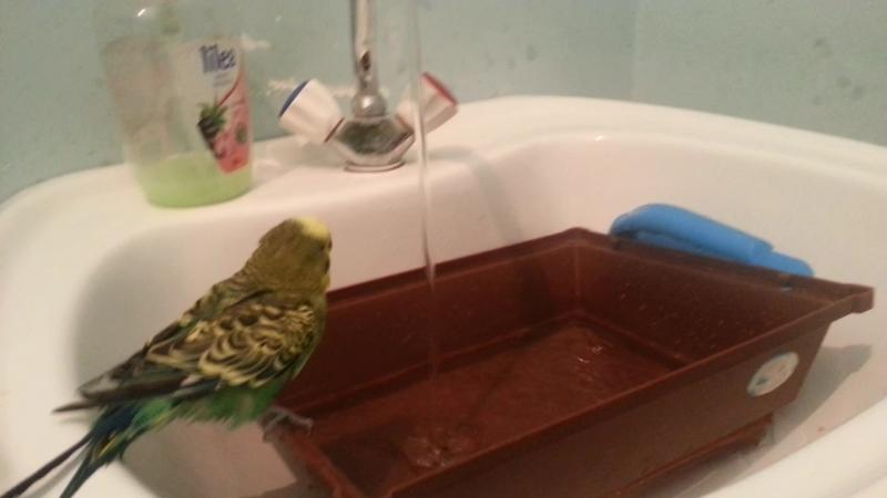 пашка моеться