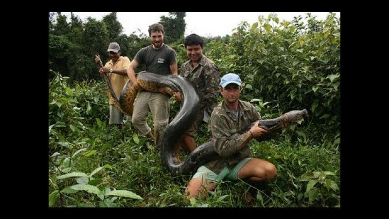 Гиганты мира животных Самая большая змея Документальные фильмы Nat Geo Wild HD