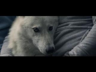 Милый ролик о дружбе человека и животных