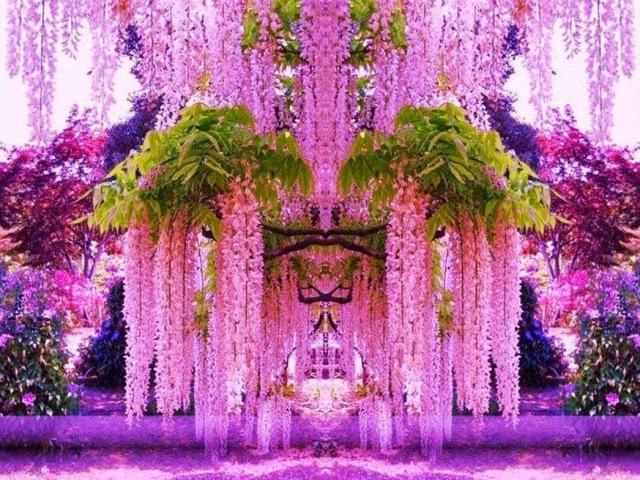 Декоративные деревья кустарники лианы Ornamental trees shrubs vines Plant a tree today