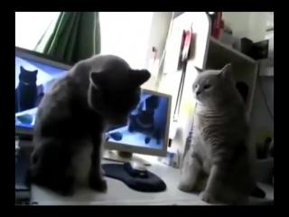 Коты играют в ладушки