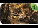 Música Anti Depressão e Ansiedade Equilibrio dos Chácras com Sons da Natureza