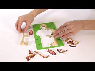 """Познавательная анатомия"" - научно-познавательные опыты Науки с Буки BONDIBON"