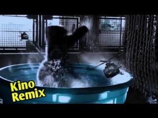 конг остров черепа kino remix gorillaz смешные приколы с животными подборка 2017 юмор ржака фильм кинг конг остров черепа