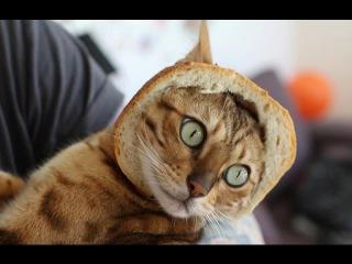 Самые Смешные Коты и Кошки Топовая Подборка. Лучшие Приколы с котами