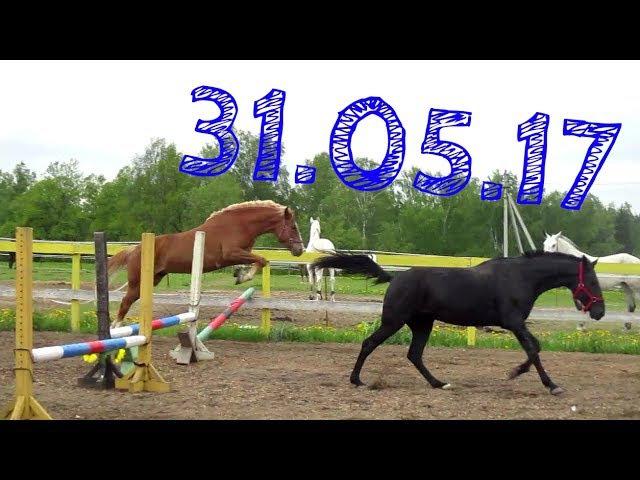 31.05.17 Попрыгали, побегали, попрыгали и ещё раз побегали😄