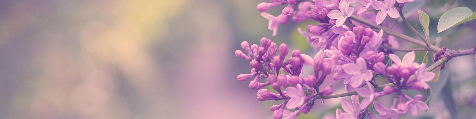 Растения с сиреневыми цветами фото и названия