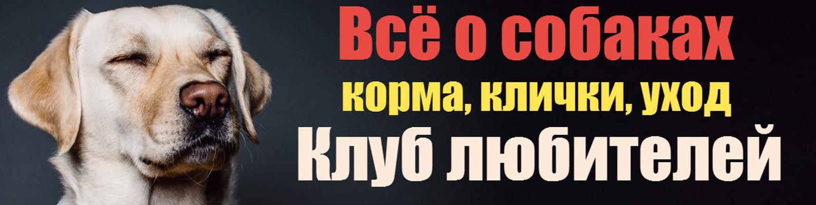 Мой пёсик | Будни собак и щенков | ВКонтакте