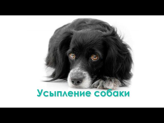 Усыпление собаки