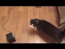 Маркиз и Томсик ищут котёнка
