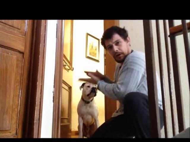 Хозяин ушел из дома забыв ключи но при возвращении домой решил стучать в дверь и собака ему открыла