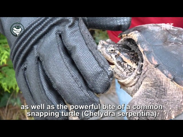 Animal Handling Gloves Venom Defender Gloves