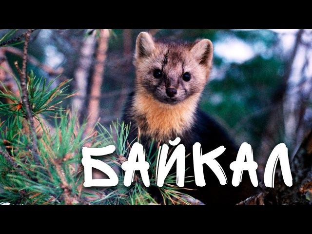 По следам заповедной истории Баргузинский заповедник Байкал