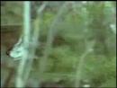 Сары Алмасқа (Рыжий Алмас) арналған Тырналар (Журавли) әні._low.mp4