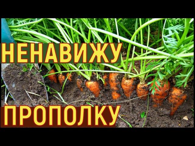 Выращивание УРОЖАЙНОЙ моркови МОЙ СПОСОБ от семян до урожая