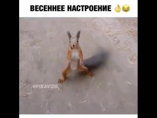 Video 0ab2d5f050501620a0e36f5b41196b5e
