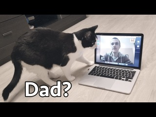 Video Сhat. The cat is looking for Daddy