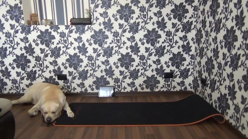 Эффективные упражнения на пресс в домашних условиях