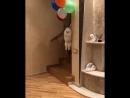Dogsgallery_Beu_t0-Bj_k.mp4