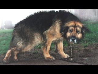 Dieser Hund war 10 Jahre angekettet. Schau, was passiert ist, als sie ihn befreit haben!