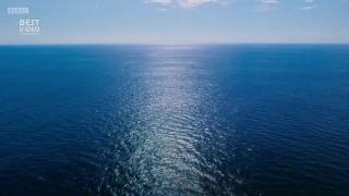Впечатляющий приквел от BBC Earth о тайнах и природе океана от Ханса Циммера и Radiohead