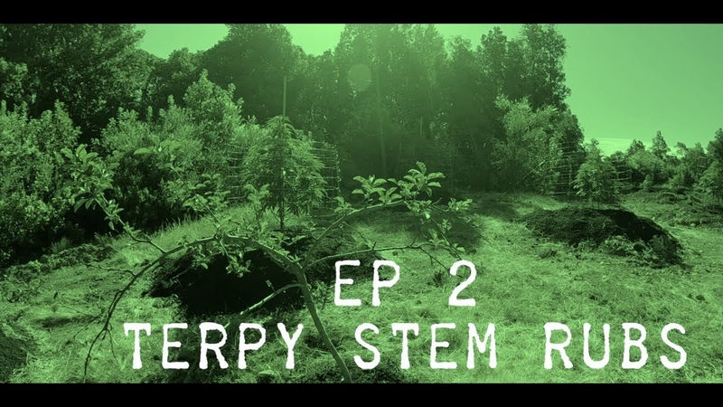 THE GREEN DOPE PROJECT EP2 TERPY STEM RUBS