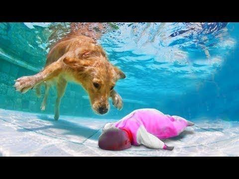 배꼽빠질 웃기고 귀여운 고양이와 강아지 영상 모음 ♥ 세계에서 가장 웃긴 4425