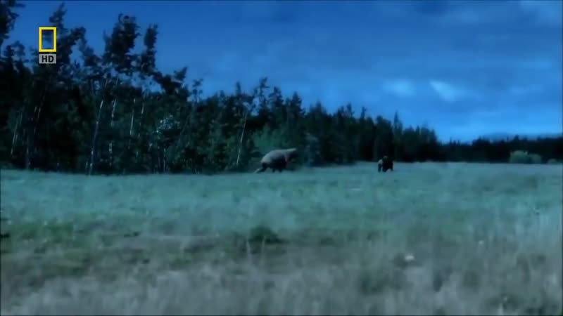Супер фильм Эволюция Медведя От доисторического хищника до наших дней