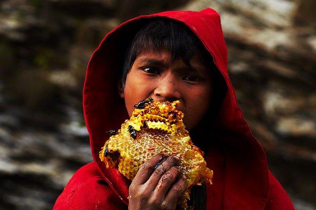 Сбор дикого мёда в Непале, изображение №9