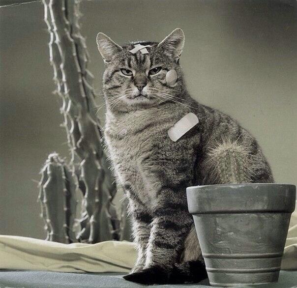 Кот К Весне Похудел. Почему кот худеет, но ест хорошо?