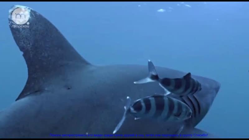 Голубые Багамы Морские глубины 5 эп