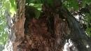 Волшебное дупло Магическое дерево в городе