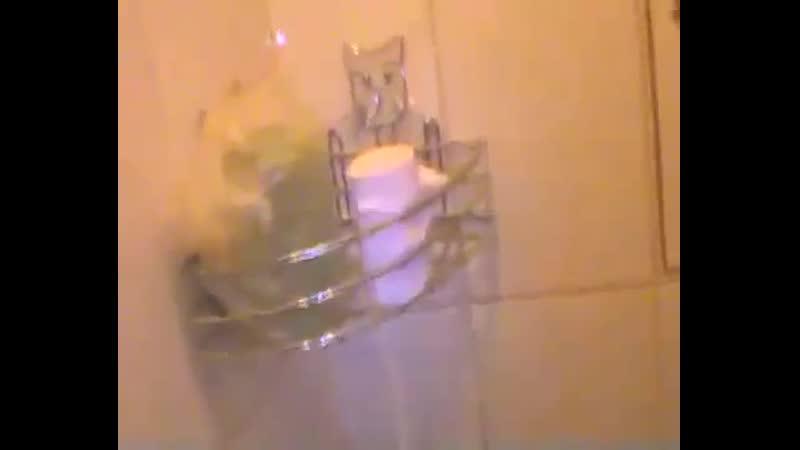 Геннадий Горин Придурок сидит в туалете юмор видео прикол про психа