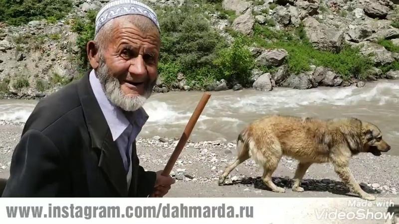 Гиссарские овцы и саги дахмарда старшего чабана Навруза и старейший чабан Хаджмурод ака из Гиссара