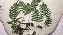Imprints of Plants. Tutorial. Отпечатки растений. Папоротник.Гипс. Мастер-класс.