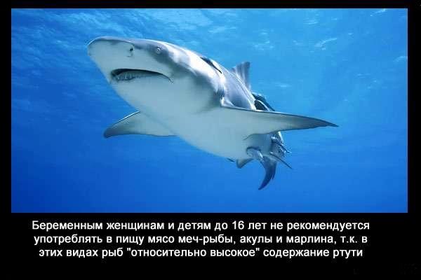 Valteya - Интересные факты о акулах / Хищники морей.(Видео. Фото) - Страница 2 E-Q6cVQWZPU