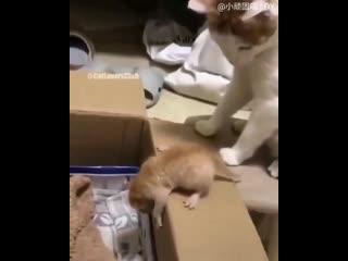 Очень терпеливая мама