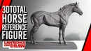 3DTotal horse equine Anatomy Drawing Reference Figure Review