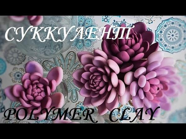 Суккулент из холодного фарфора ; Succulent from cold porcelain ; 肉质的冷瓷器