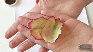 Волшебный фоамиран Лепесток розы рубашка Автор Юлия Козьякова