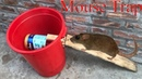 Stupid Mouse Trap / Mouse Trap With Water Bottle / Easy Saving Mouse / Mouse Trap In Action