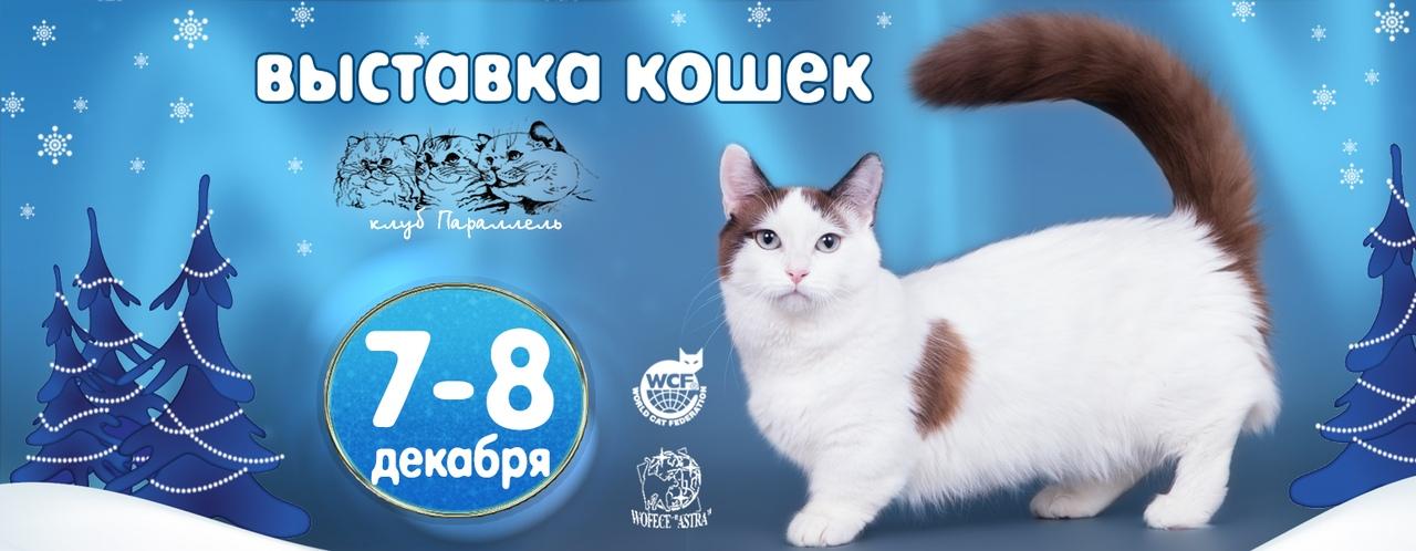 """Афиша Воронеж Выставка кошек и щенков """"Зимнее танго"""""""