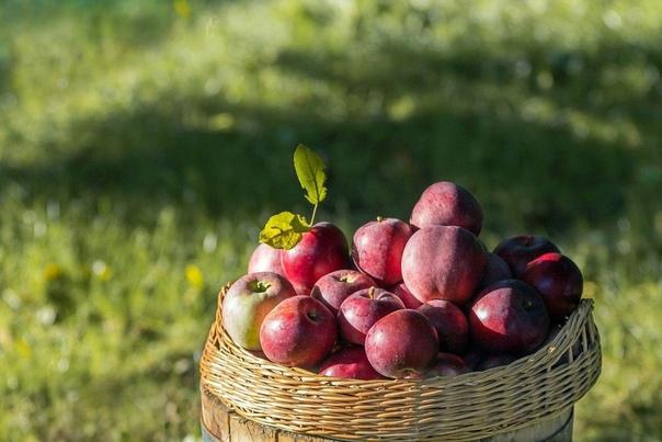 Притча о красном яблоке