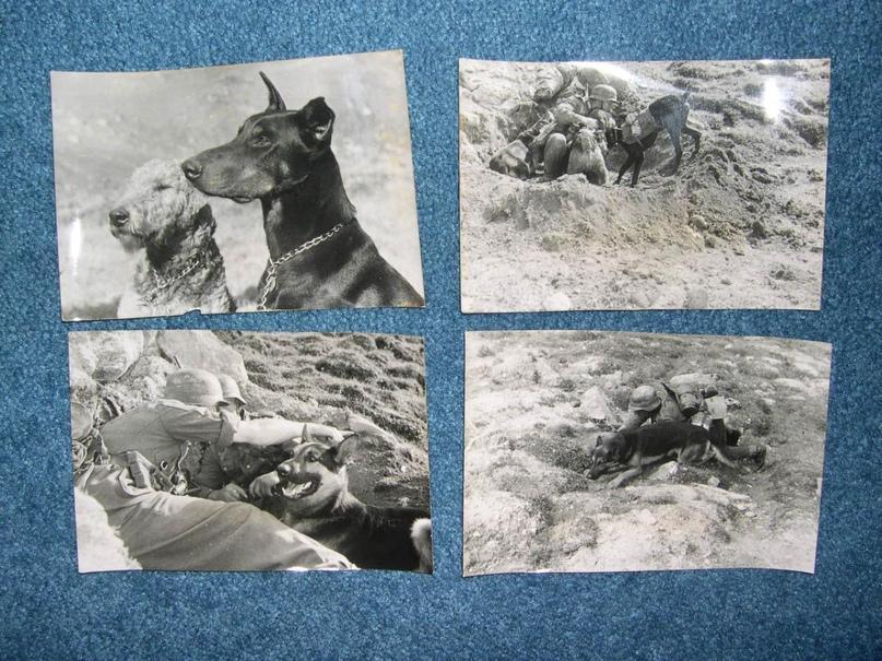 Рядовой вермахта Тассо, изображение №30