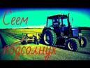 Сеем подсолнух. Трактор Беларус и сеялка. We are sowing a sunflower. Tractor and seeder. vseklevo