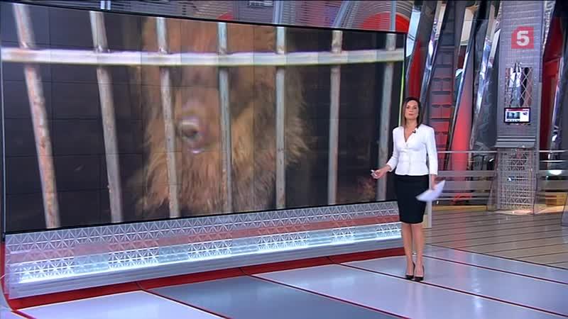 Спасение диких животных в Калуге