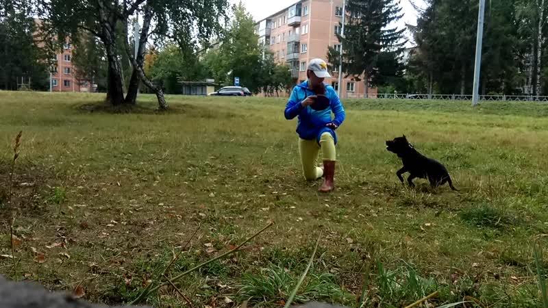 Фесик Наталья и стаффбуль Дива средний 1 задание