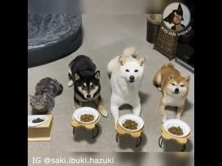 Какие послушные собачки, особенно серенькая, что с левого края экрана -)
